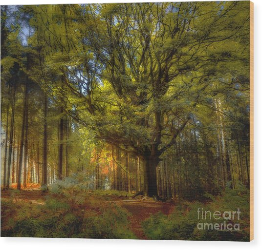 Broceliande Forest Wood Print