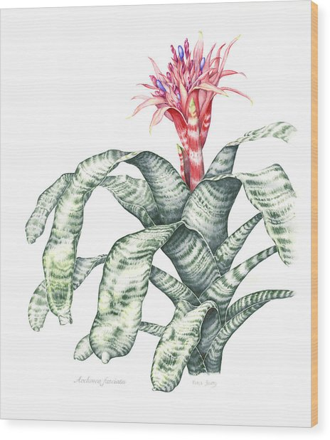Bromeliad Aechmea Fasciata Wood Print