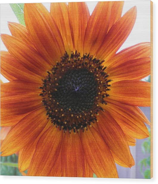 Bronze Sunflower No 2 Wood Print by Jeanette Oberholtzer