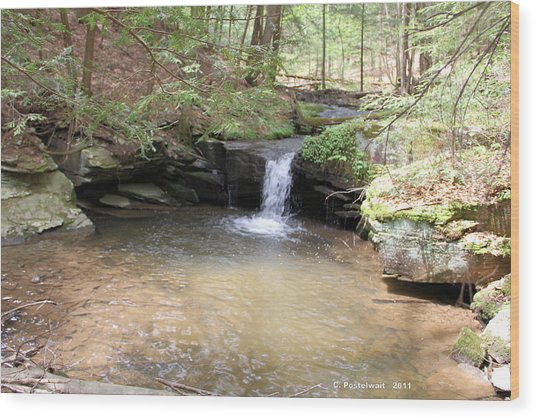 Brook Trout Falls Wood Print