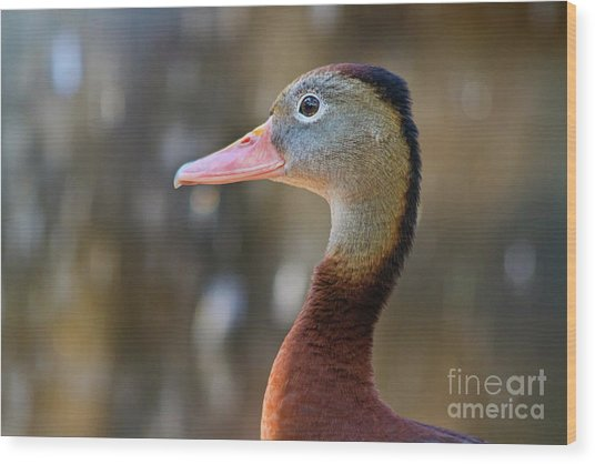 Brown And Grey Duck In Profile Wood Print