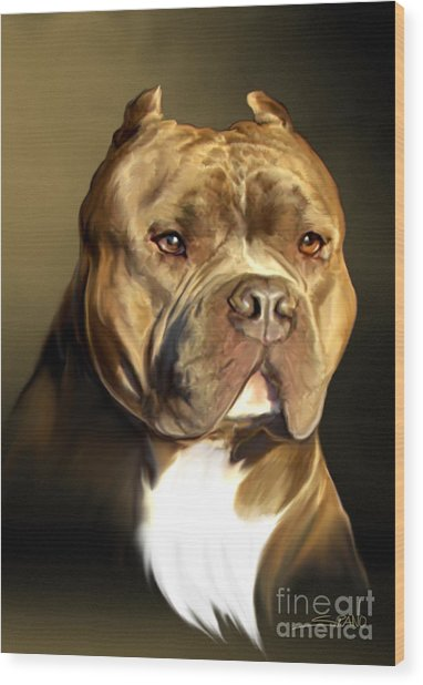 Brown And White Pit Bull By Spano Wood Print