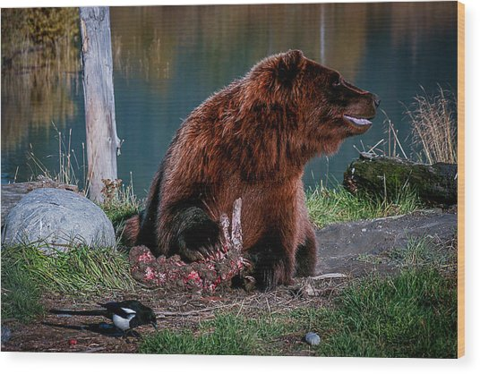 Brown Bear And Magpie Wood Print