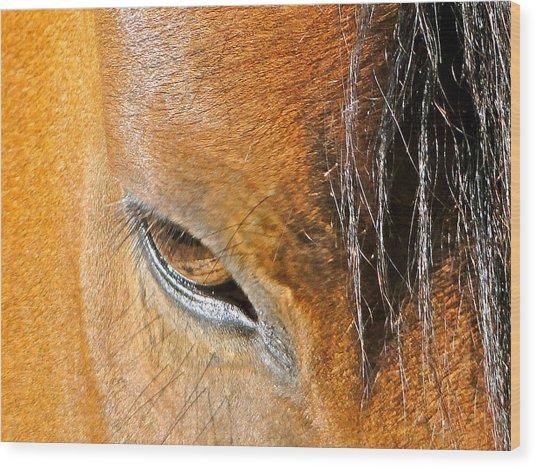 Brown-eyed Wild Horse Wood Print by Liz Vernand