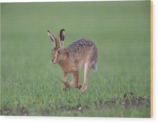 Brown Hare Running Wood Print