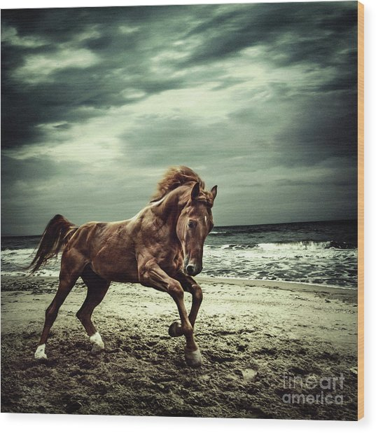 Brown Horse Galloping On The Coastline Wood Print