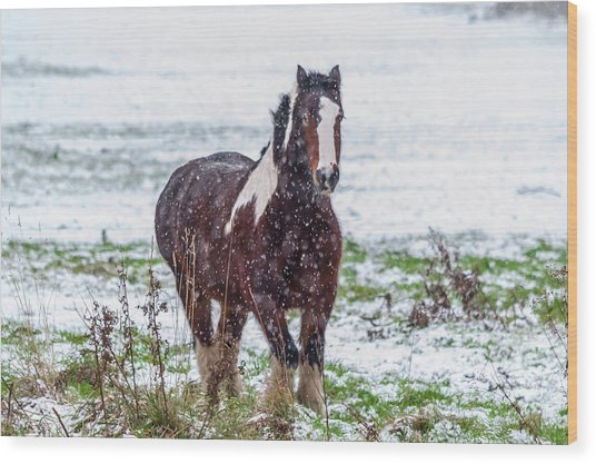Brown Horse Galloping Through The Snow Wood Print