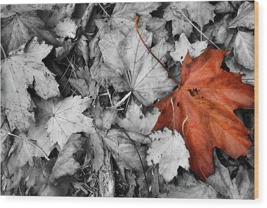 Brown Maple Leaf Wood Print