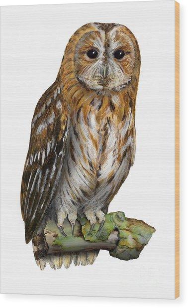 Brown Owl Or Eurasian Tawny Owl  Strix Aluco - Chouette Hulotte - Carabo Comun -  Nationalpark Eifel Wood Print