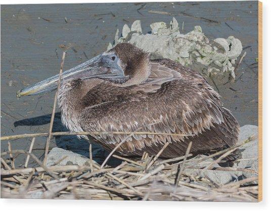 Brown Pelican 3 March 2018 Wood Print