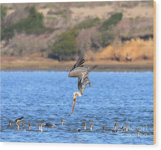 Brown Pelican Diving Wood Print by Wingsdomain Art and Photography