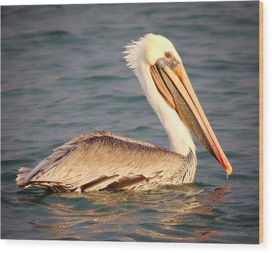 Brown Pelican Floating Wood Print
