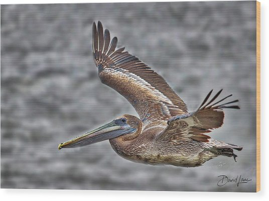 Wood Print featuring the photograph Brown Pelican Flying by David A Lane