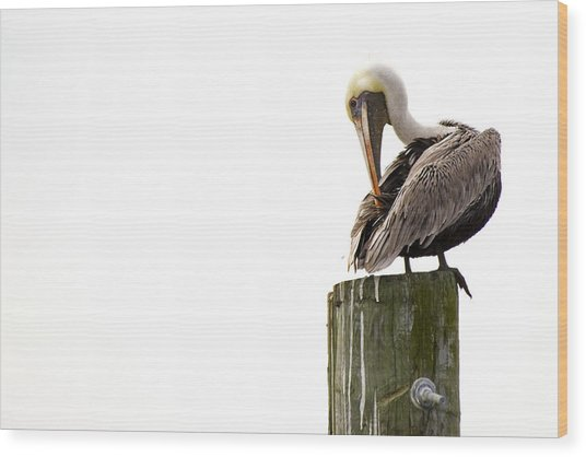 Brown Pelican On Piling Wood Print
