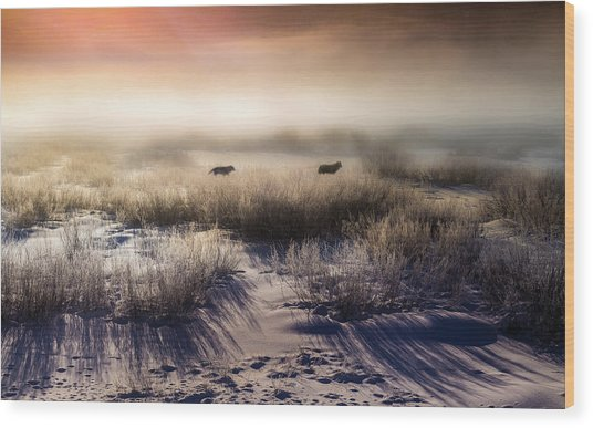 Brumous Willow Bed // Greater Yellowstone Ecosystem Wood Print