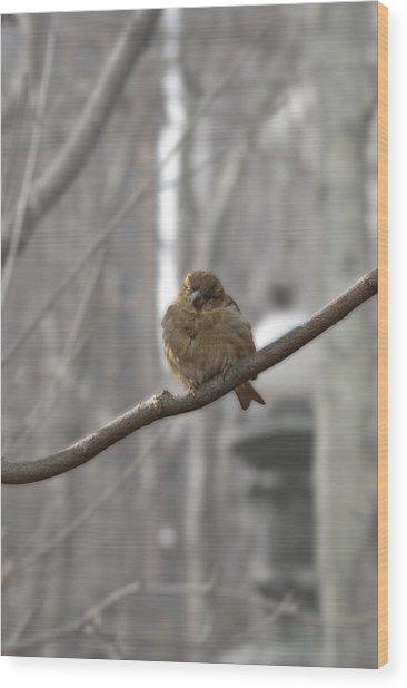 Bryant Park Bird Nyc Wood Print