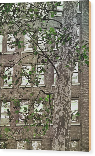 Bryant Park Wood Print by JAMART Photography