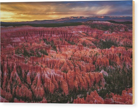 Bryce Canyon In The Glow Of Sunset Wood Print