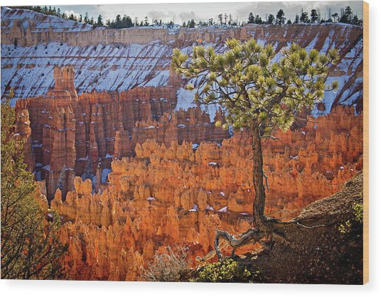 Wood Print featuring the photograph Bryce Canyon by Wesley Aston