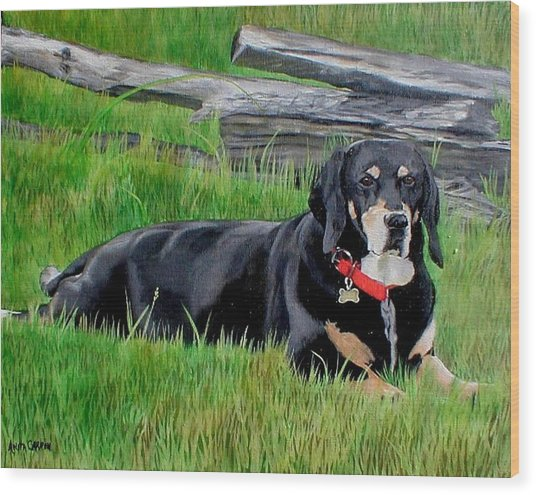 Bubba Wood Print by Anita Carden