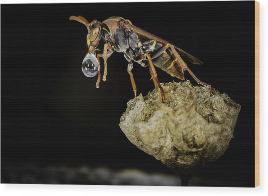 Bubble Blowing Wasp Wood Print