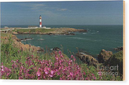 Buchan Ness Lighthouse And Spring Flowers Wood Print