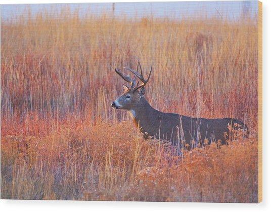 Wood Print featuring the photograph Buck Deer In Morning Sunlight by John De Bord