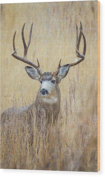 Buck In Snow Wood Print