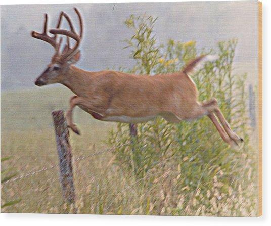 Buck Jumping Fence Wood Print by Steve Carpenter