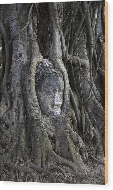 Buddha Head In Tree Wood Print