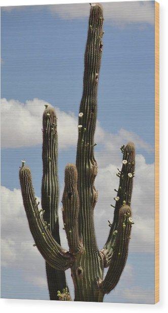 Budding Saguaro Cactus Babies Wood Print