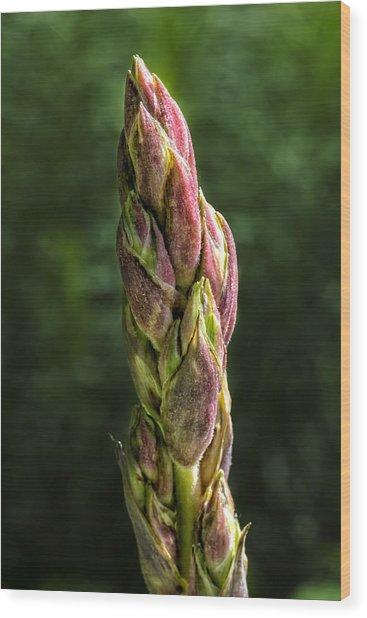 Budding Stalk Wood Print by Robert Ullmann