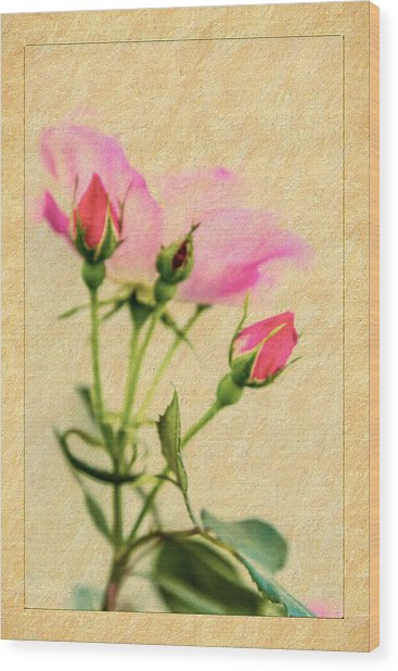 Buds And Bloom - Rose Floral Wood Print by Barry Jones