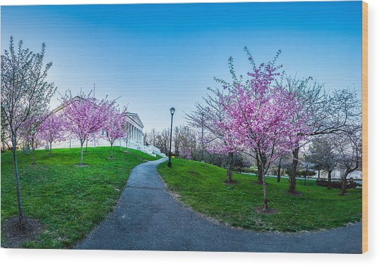 Buffalo Cherry Blossoms 1 Wood Print