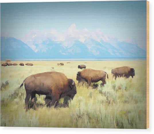 Buffalo Roam, Smokey Grand Tetons, Wyoming Wood Print