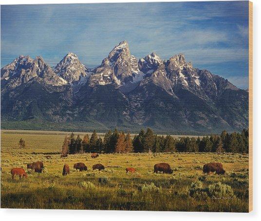 Buffalo Under Tetons 2 Wood Print by Leland D Howard