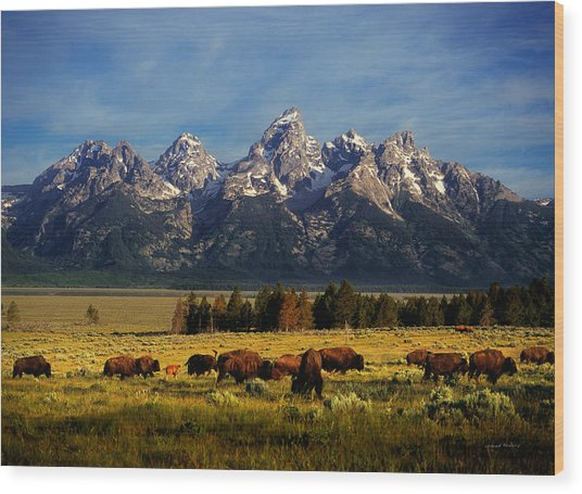 Buffalo Under Tetons Wood Print