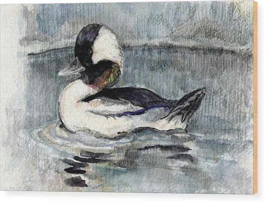 Bufflehead Wood Print