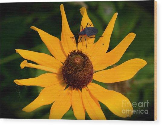 Bug On A Flower Wood Print by Sherri Williams