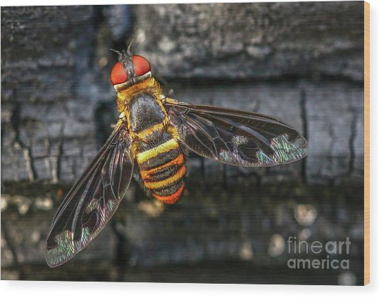 Bug With Red Eyes Wood Print