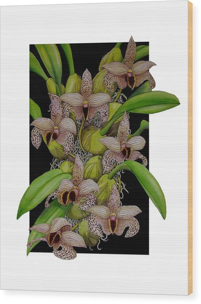 Bulbophyllum Sumatranum Wood Print by Darren James Sturrock