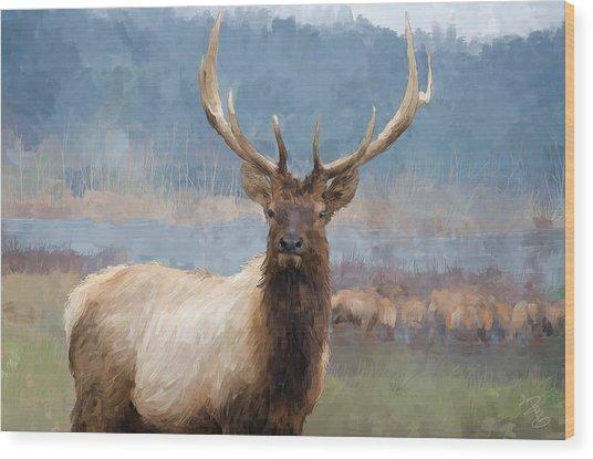 Bull Elk By The River Wood Print