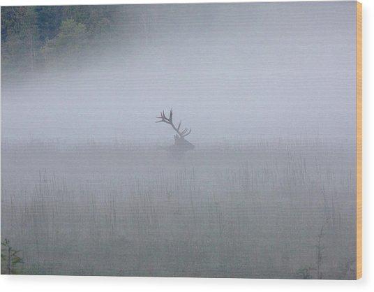 Bull Elk In Fog - September 30, 2016 Wood Print