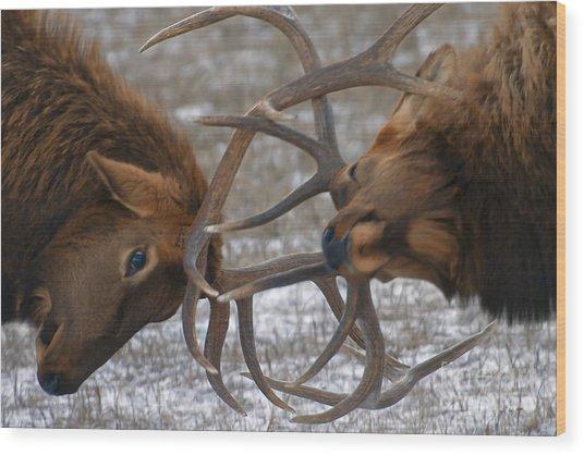 Bull Elk In The Rut-signed Wood Print