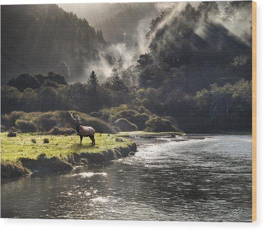 Bull Elk In Wilderness Wood Print