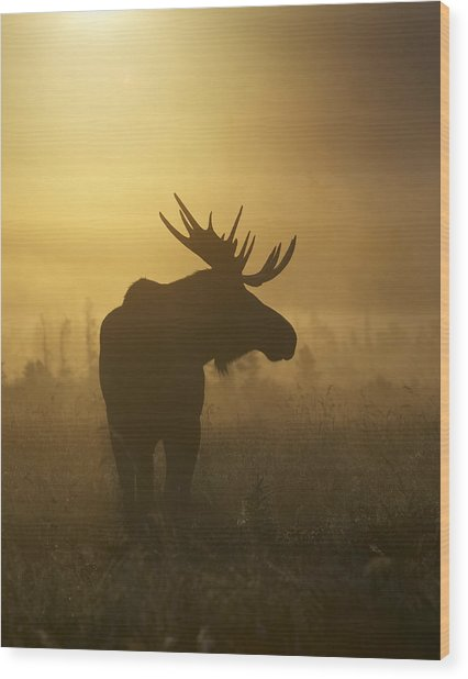 Bull Moose In Fog Wood Print