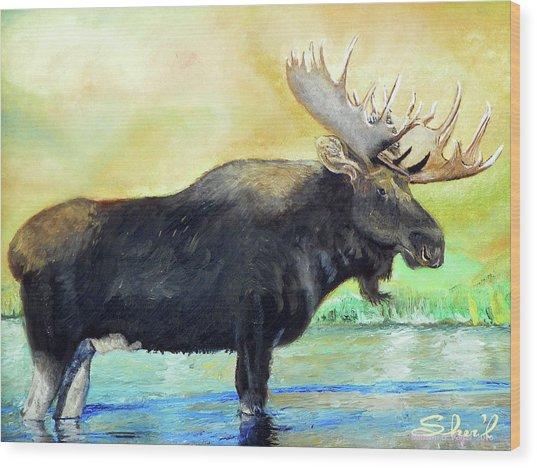 Bull Moose In Mid Stream Wood Print
