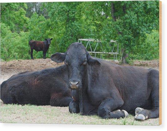 Bull Relaxing Wood Print