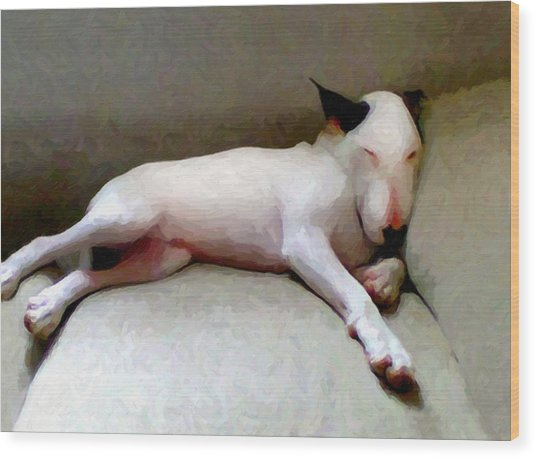 Bull Terrier Sleeping Wood Print
