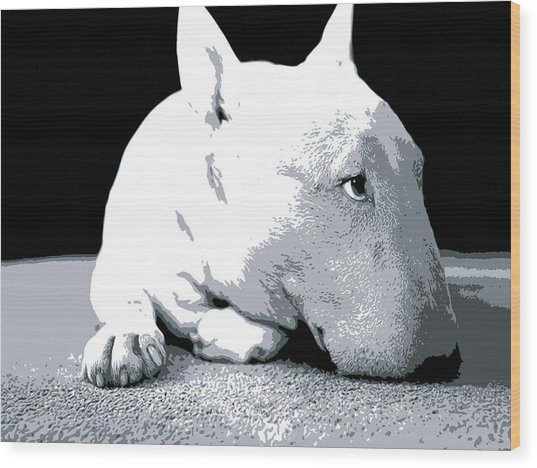 Bull Terrier White On Black Wood Print by Michael Tompsett